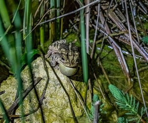 animals, pond, and toad image