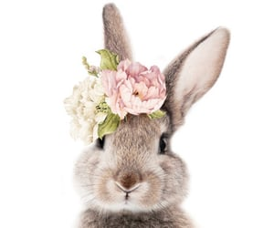 bunny, flowers, and cute image
