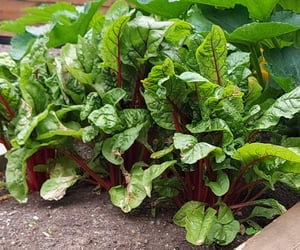 gardening and vegetables image