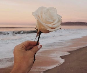 beach, flowers, and rose image