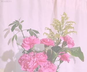 carnation, pink flowers, and rosa image