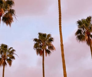 la, palm trees, and summer image