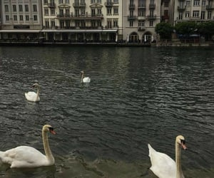 aesthetic, city, and Swan image