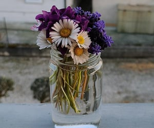colori, colours, and fiori image