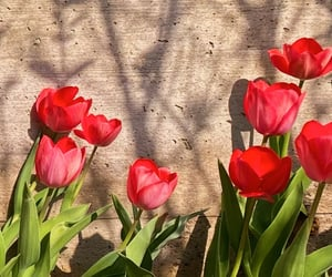 flower, flowers, and red flowers image