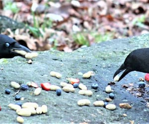birds, eating, and black image