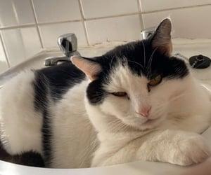 animals, older cat, and cat image