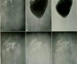 bizarre, eerie, and fairy core image