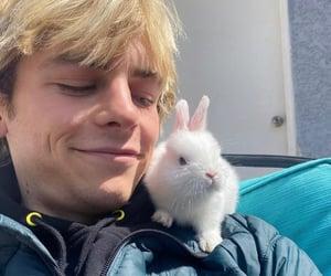 boys, bunny, and caos image