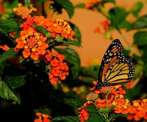butterfly, image, and images image