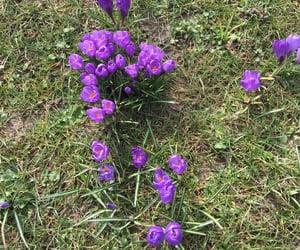 😊 and زهور الربيع image