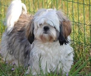 dog and doglover image