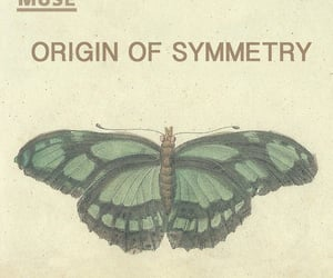 archive, butterfly, and muse image