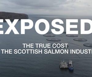 animal cruelty, fish, and salmon image