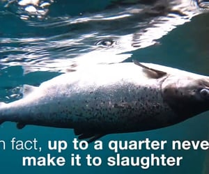 animal cruelty, fish, and health image