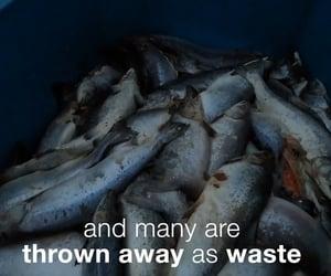 environment, fish, and scotland image
