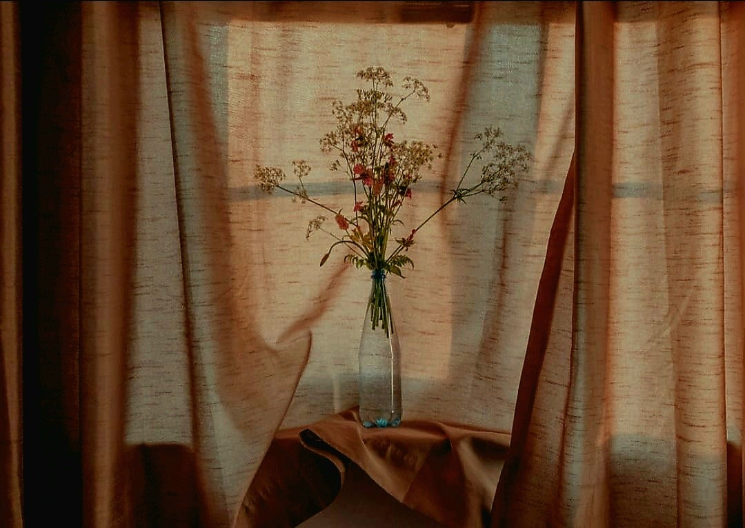 photography, aesthetic, and Wild Flowers image
