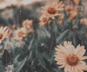 aesthetic, flowers, and beautiful image