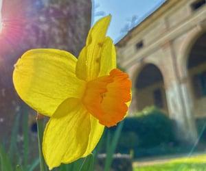 flower, light, and spring image