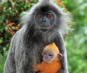 primates, wildlife, and animals image
