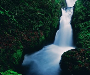 green, nature, and lush image