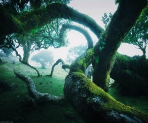 green, landscape, and moss image