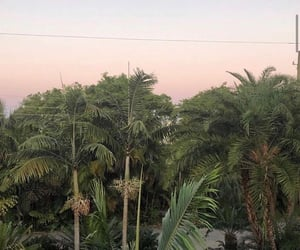 green, aesthetic, and palms image