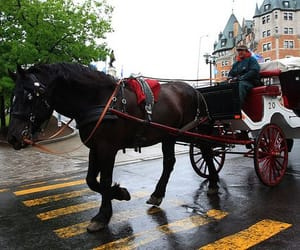 horse drawn carriages image