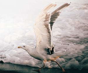 beach, seagull, and wildlife image