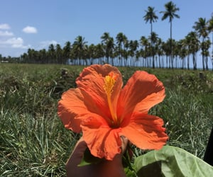 beach, bloom, and flowers image