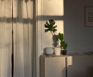 inspiration and plants image