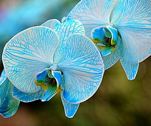 dof, flowers, and blue image