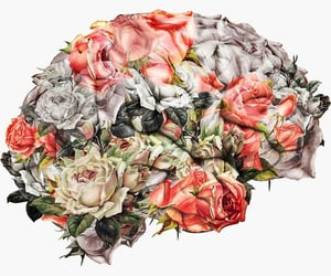 anatomy, roses, and art image