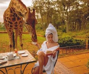 giraffe, safari, and travel image