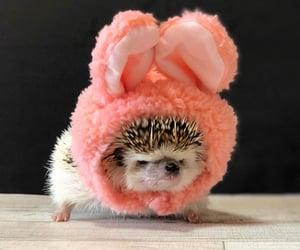 adorable, funny, and hedgehog image