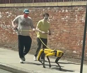 dog, inspiration, and robot image