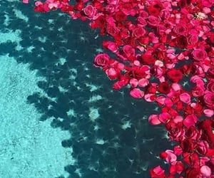 flowers, water, and red image