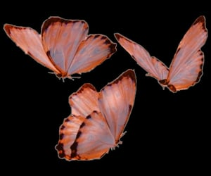 butterfly, png, and overlays image