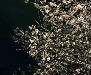 art, black, and cherry blossom image