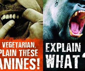 nature, monkey, and vegan image