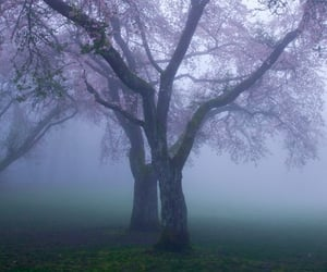 tree, nature, and purple image