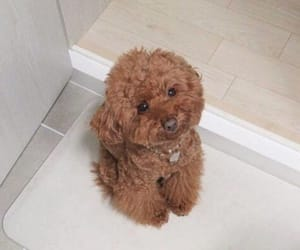 adorable, cuteness, and dog image