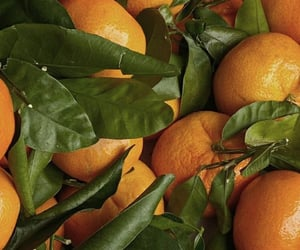 background, citrus, and clementine image