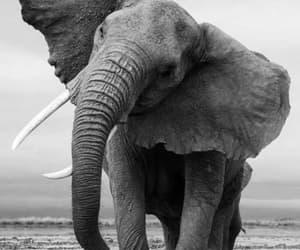 beautiful, elephants, and animals image