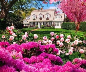 cherry blossom, dream home, and pink image