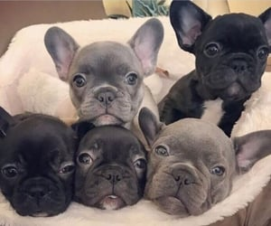 dogs many puppy image