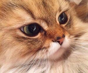 cat eyes beautiful cute image