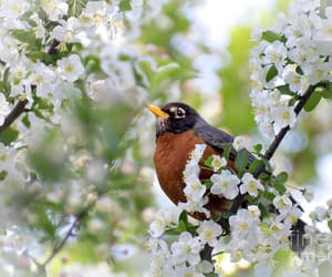 animals, birds, and flowers image