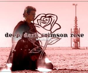 Anakin Skywalker - Crimson Rose
