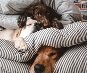dogs and pillows image